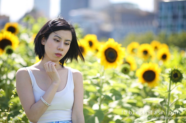 how to grow sunflowers in melbourne